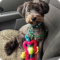 Adopt A Pet :: Onyx - Oceanside, CA