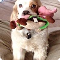 Adopt A Pet :: Clyde - Rancho Mirage, CA