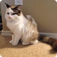 Adopt A Pet :: Lilly - Colorado Springs, CO