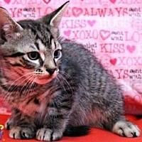 Adopt A Pet :: Oak - Sebastian, FL