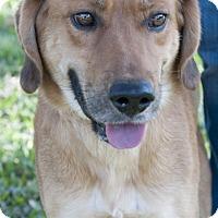 Adopt A Pet :: Bob - Norwalk, CT