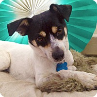 Adopt A Pet :: Paco - San Francisco, CA