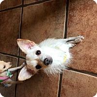 Adopt A Pet :: Polly - Tucson, AZ