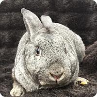 Adopt A Pet :: Brooks - Watauga, TX