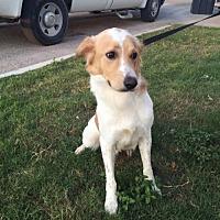 Adopt A Pet :: Charlie - Del Rio, TX