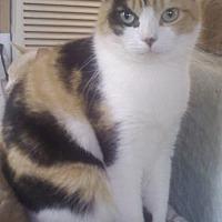 Adopt A Pet :: Eve - Bronx, NY