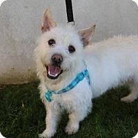 Adopt A Pet :: Gordon - Los Angeles, CA