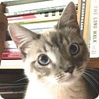 Adopt A Pet :: Picassa - Palo Alto, CA