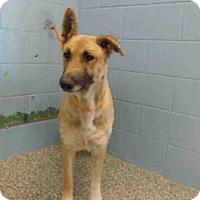 Adopt A Pet :: A502771 - San Bernardino, CA