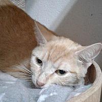 Adopt A Pet :: Minnie Cooper - Ozark, AL