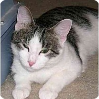 Adopt A Pet :: Tiger - Montgomery, IL