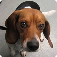 Adopt A Pet :: Toby - Indianapolis, IN