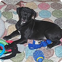 Adopt A Pet :: Cole - Minneola, FL