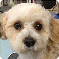 Adopt A Pet :: Jerry - La Costa, CA