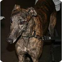 Adopt A Pet :: Lava Linecum - Smyrna, TN