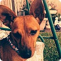 Adopt A Pet :: Precious - Kingwood, TX
