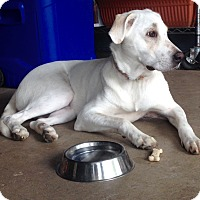 Adopt A Pet :: Mona - Southington, CT
