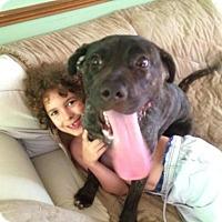 Adopt A Pet :: Bazzy - Kimberton, PA