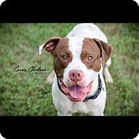 Adopt A Pet :: Calvin @ Animal Shelter - Zanesville, OH