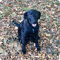 Adopt A Pet :: Jackson-he is a wonderful dog - Stamford, CT