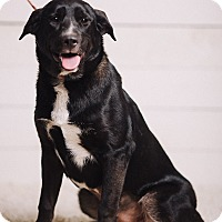 Adopt A Pet :: Clover - Portland, OR