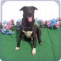 Adopt A Pet :: BOBBY - Marietta, GA