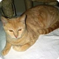 Adopt A Pet :: Keddis - Vancouver, BC