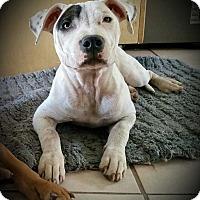 Adopt A Pet :: Blanca - Cypress, CA