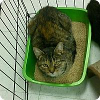 Adopt A Pet :: Shelby - Hamilton, ON