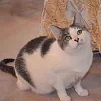 Adopt A Pet :: Rafaela & Sheba - Horsham, PA