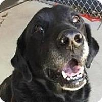 Adopt A Pet :: Briggs - Springdale, AR