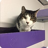 Adopt A Pet :: Fanny - Harrison, NY