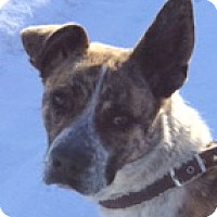 Adopt A Pet :: Nishi - Pinedale, WY
