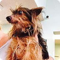 Adopt A Pet :: ALLAN - PT ORANGE, FL