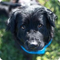 Adopt A Pet :: Cammie - Pacific Grove, CA