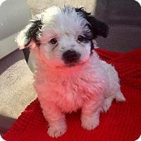 Adopt A Pet :: Marlin - Brea, CA