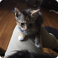 Adopt A Pet :: Marigold - Tampa, FL
