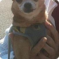 Adopt A Pet :: Montey - Davie, FL