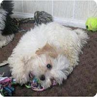 Adopt A Pet :: Lulu - Antioch, IL