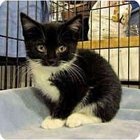 Adopt A Pet :: Derby - Colmar, PA