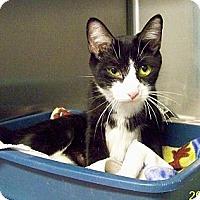 Adopt A Pet :: Blossom - Dover, OH