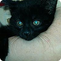 Adopt A Pet :: Toni (kissing bandit) - Sterling Hgts, MI