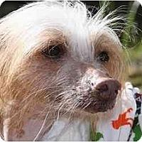 Adopt A Pet :: Colby (NH) - Gilford, NH