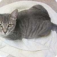 Adopt A Pet :: Pebbles - Mobile, AL