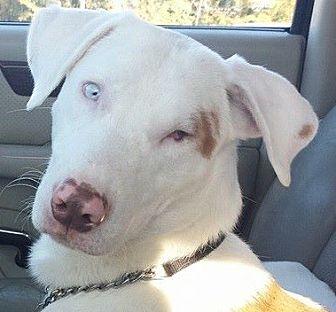 Shepherd (Unknown Type) Mix Dog for adoption in Lakeland, Florida - Chance