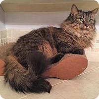 Adopt A Pet :: Mallory - Merrifield, VA