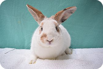 Other/Unknown Mix for adoption in Fountain Valley, California - Starburst