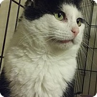 Adopt A Pet :: Sebastian - Delmont, PA