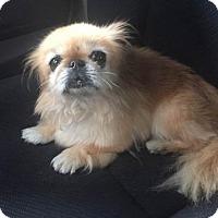 Adopt A Pet :: Cutie - N. Babylon, NY