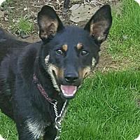 Adopt A Pet :: Penny G - Lima, PA